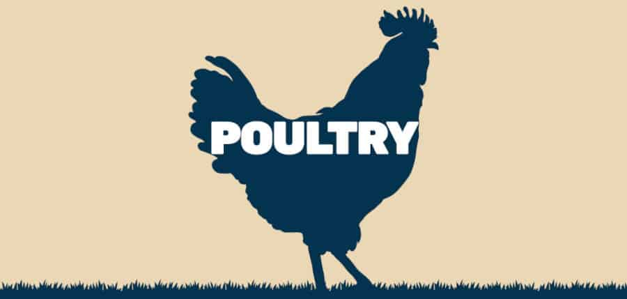 graphic of poultry written inside a silhouette of a chicken