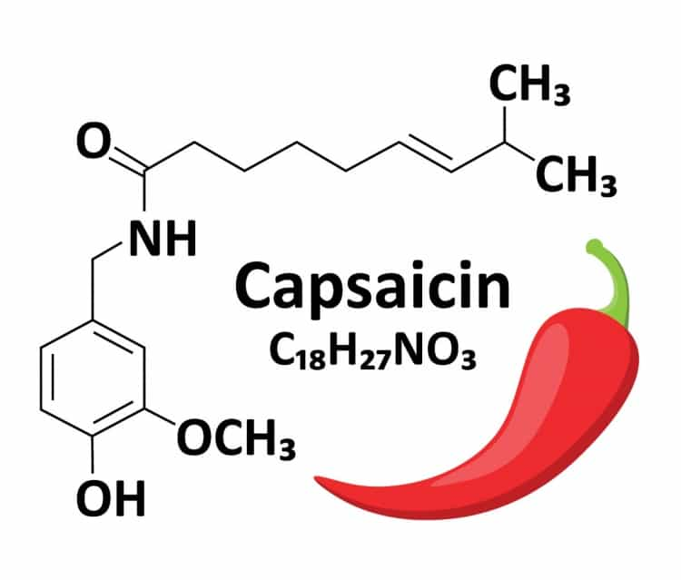 Capsaicin chemical formula next to a vector pic of a chili