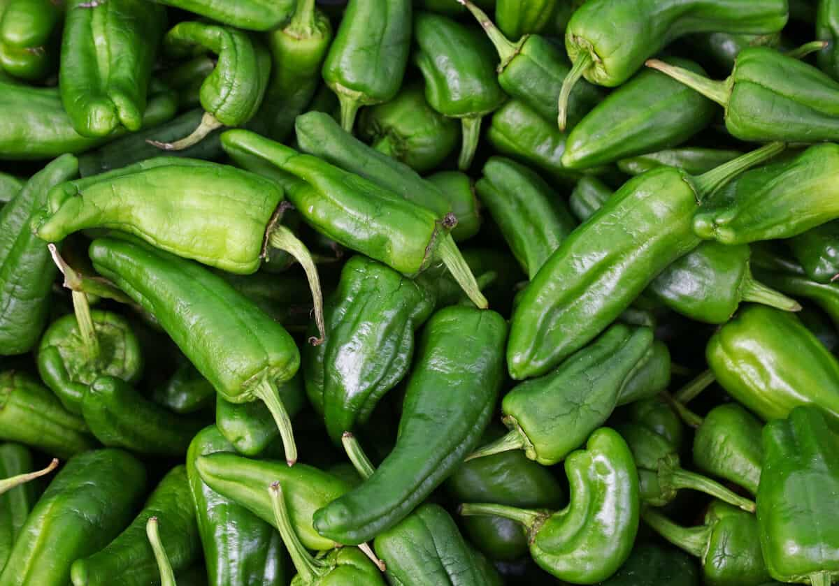Overhead view of a large number of padron peppers