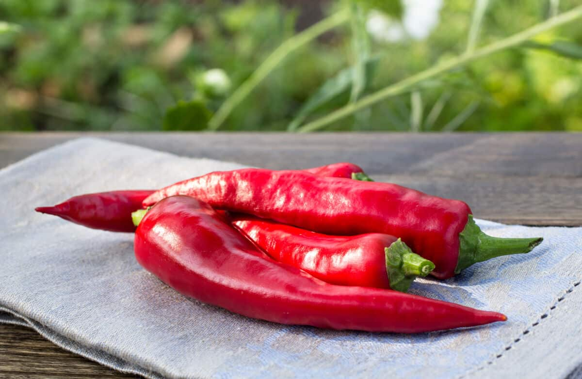 Red paprika peppers sitting on a grey table cloth on a