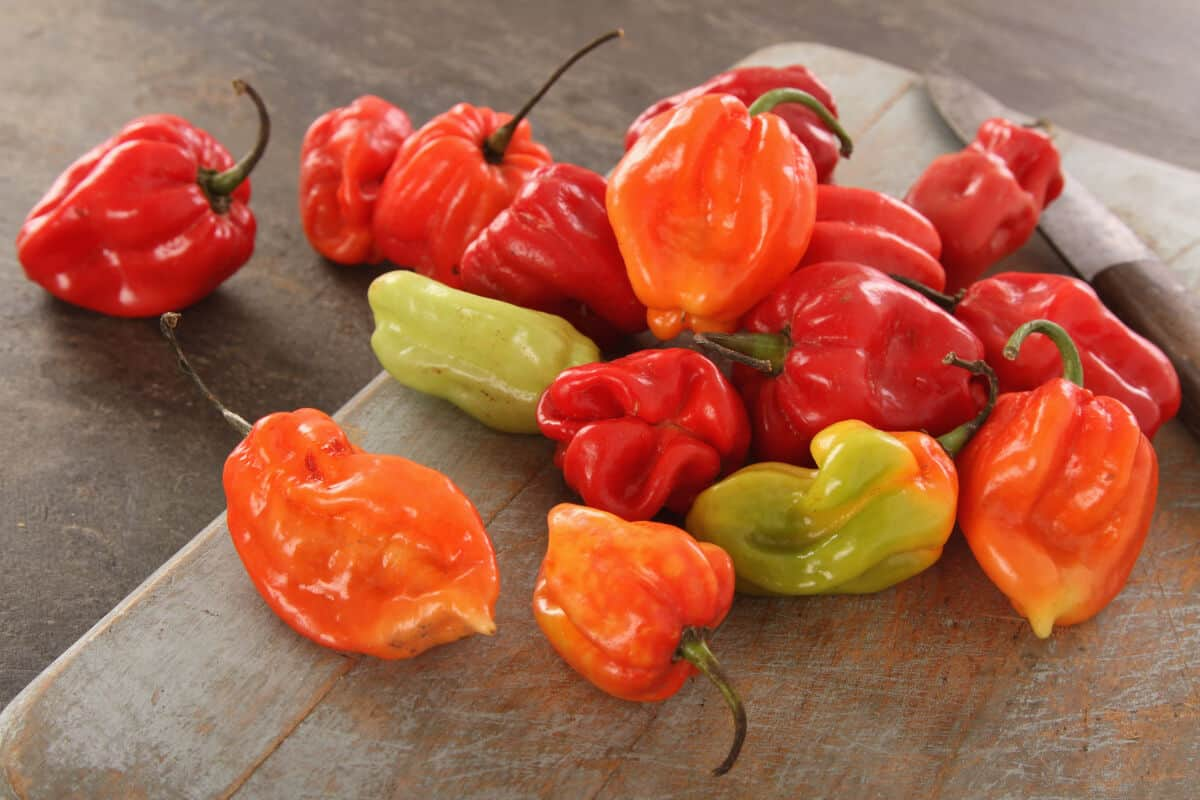 Different colored scotch bonnet chilis on a wooden surface