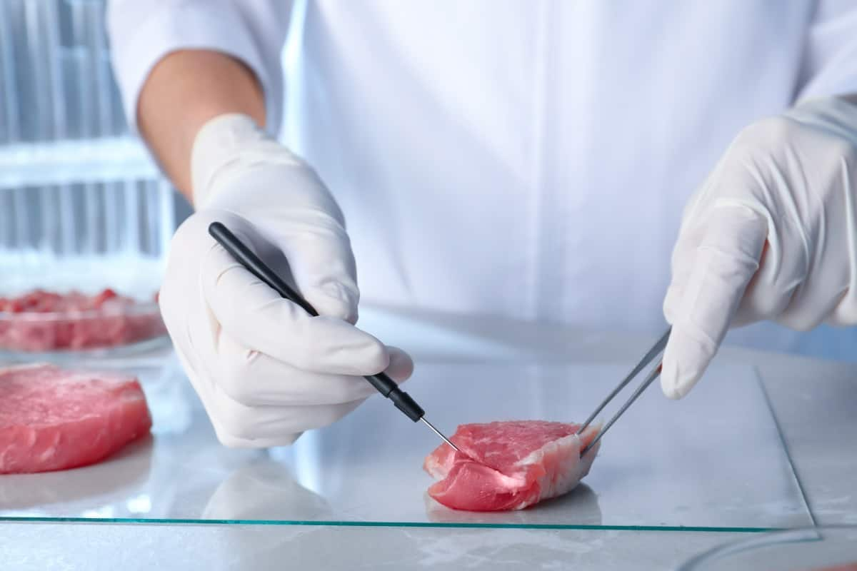 Beef in a petri dish being prepared for laboratory tests by a mans hands with scalpels in.